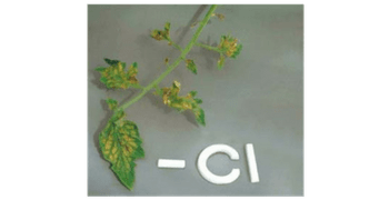 Carencia de nutrientes Cloro