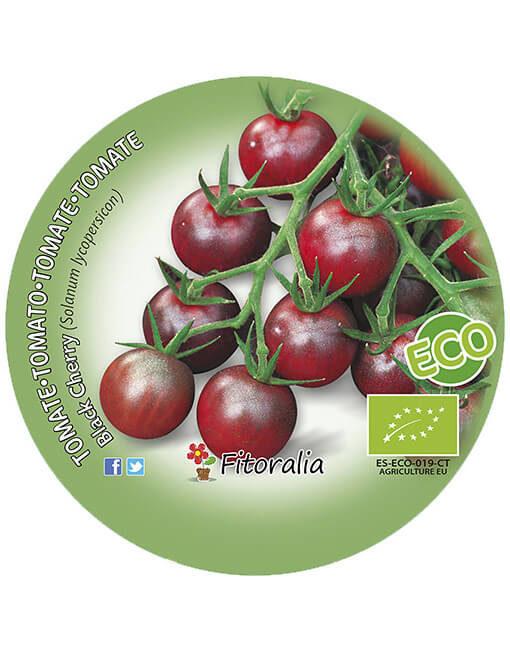 Tomate Black Cherry ECO M-10,5