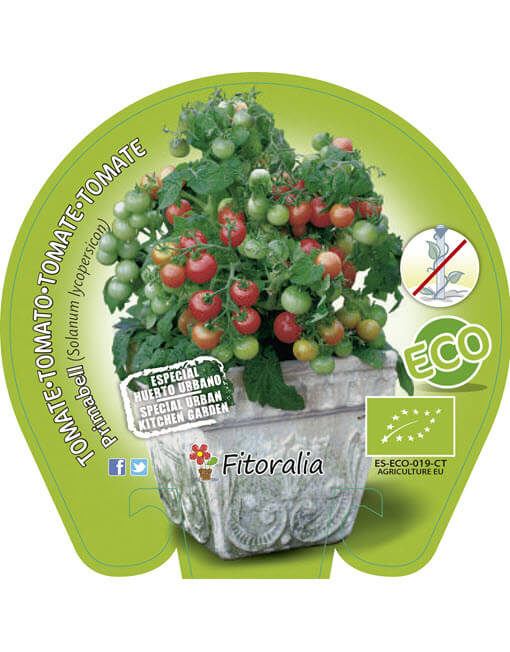 Tomate Primabell ECO M-10,5