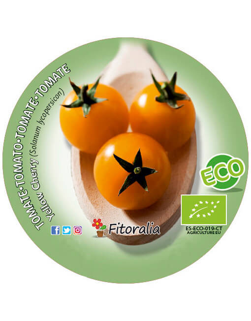 Tomate Yellow Cherry ECO M-10,5